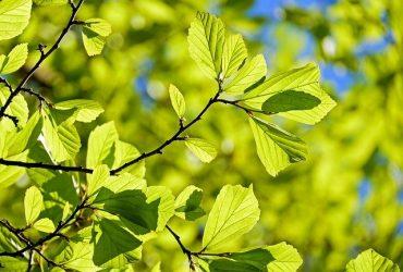 Welke boom past in mijn tuin?